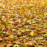 preparing your commercial HVAC system for fall and winter
